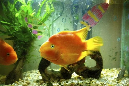 Jour 7 - Même les poissons ont été transformés en lutins sous-marins...