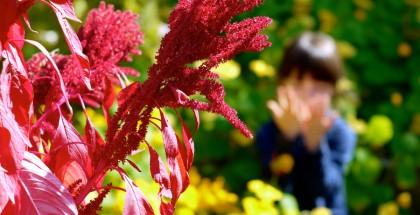 Derrière un majestueux plant d'amarante, ma coquine «butine» les plants de capucine en espérant faire du miel...