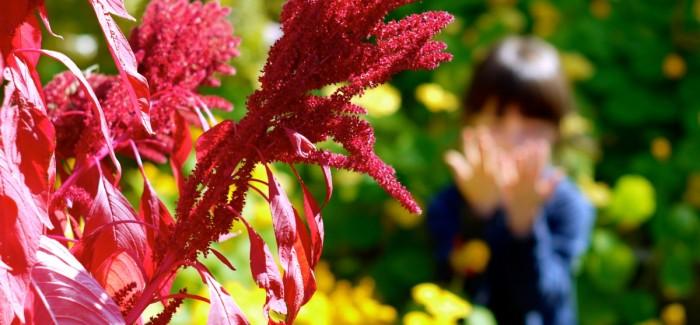 Potager d'automne: la vie après les tomates
