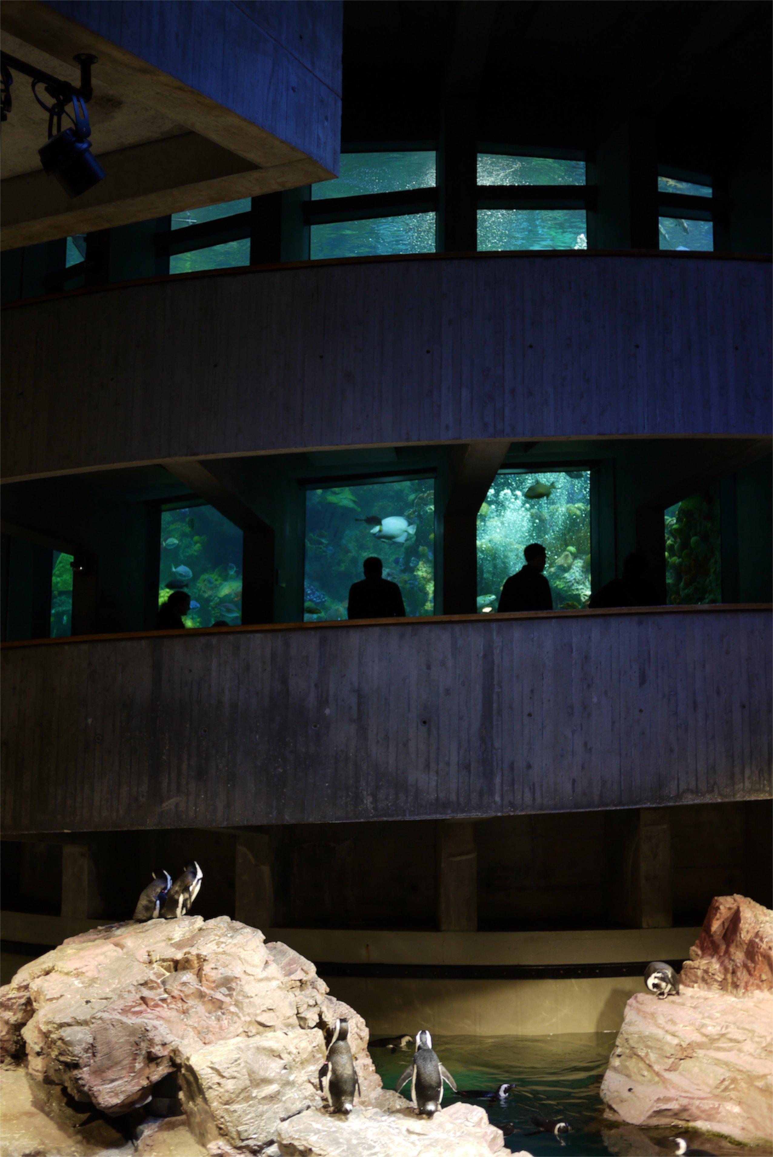 Aquarium of New England: bondé, mais quand même un beau détour à mettre à l'horaire.