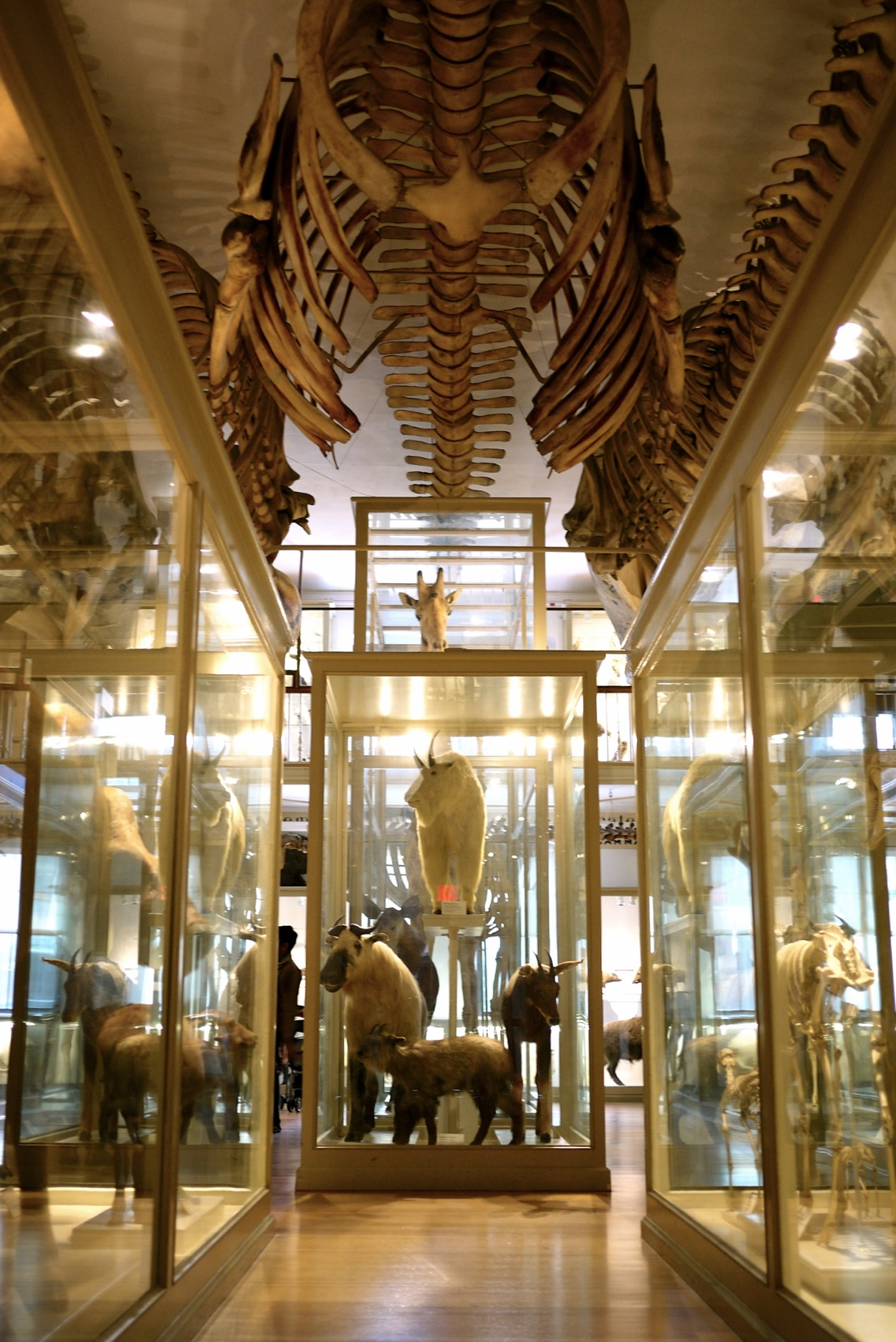 Harvard Museum of Natural History: un coup de cœur.