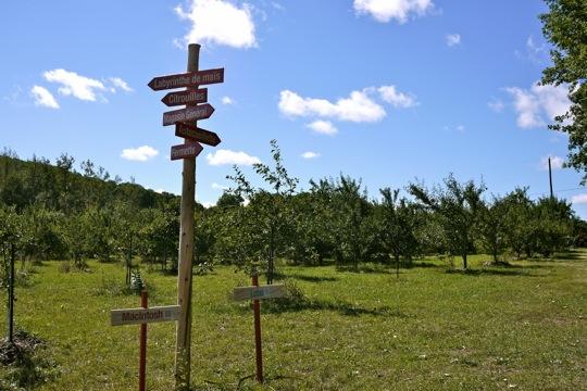 À la croisée des chemins, au verger Labonté de la pomme.
