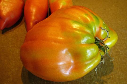 Opalka mutante ou tomates siamoises?
