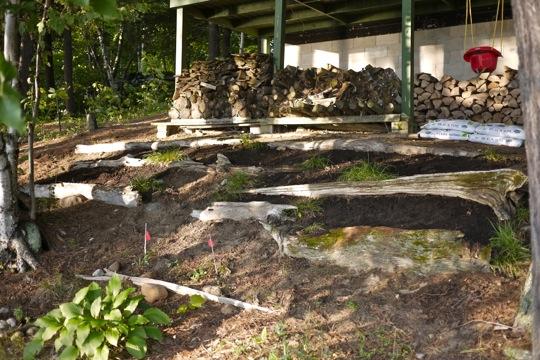 Paliers de plantation de bois fossilisé.