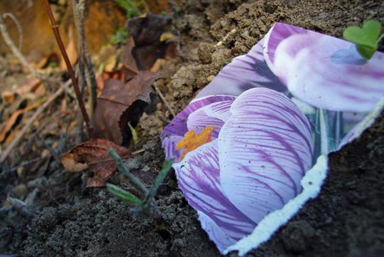 Truc de plantation: fleurir une plate-bande avec des photos