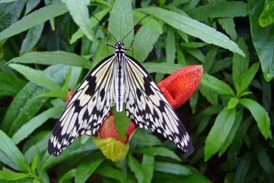 papillons_en_liberte_2009