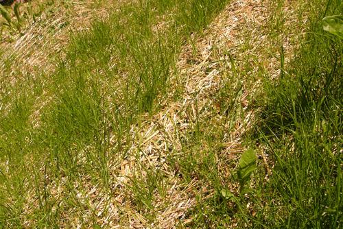 R ussir l 39 ensemensement d 39 une pelouse en pente for Quand semer une pelouse