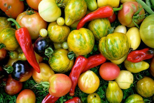 Le temps des récoltes: un aperçu de ce qui pousse dans mon potager en 2012..