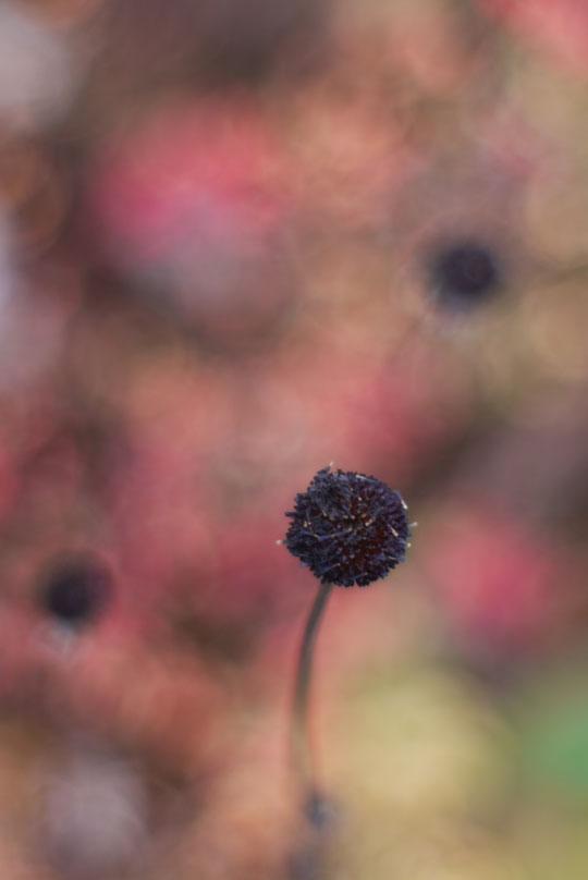 Chasse aux dernières images d'automne
