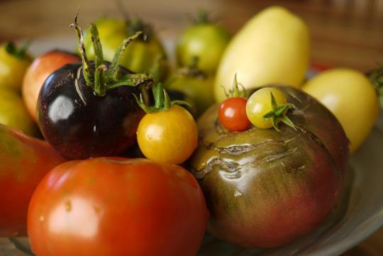 Cultiver sa folie, ça n'a pas de prix (ou la tomate à 64$)