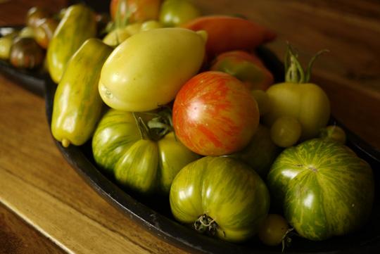 Une belle récolte de tomates