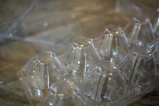 Transformer les contenants d'oeufs en mini-serres pour les semis